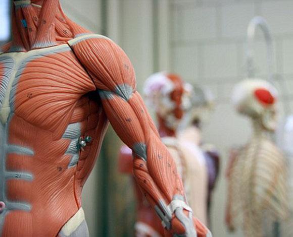 روبوتات مغطاة بجلد بشري لتطوير رقع جلدية تساعد في علاج المصابين