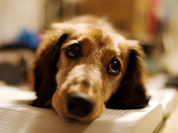 بالفيديو: كلب يتعرض للضرب بوحشية!