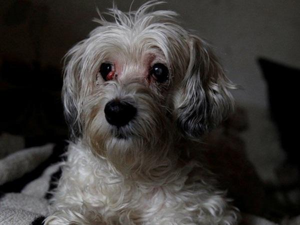 إنقاذ كلبة من الموت .. بعدما ظلت بجوار جثة صاحبتها لأسابيع