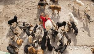 مليونير صيني يفقد ثروته بسبب الكلاب