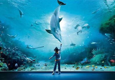 رحلة حول العالم الى أكبر 10 أحواض سمك