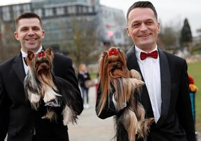 بالصور... مسابقة أجمل كلب في العالم 2017