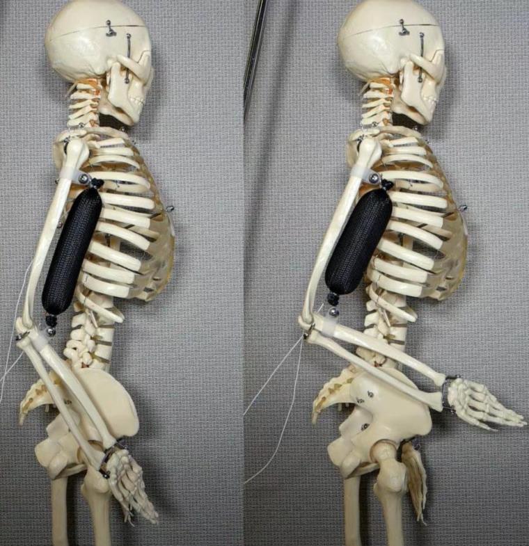 عصر جديد للروبوتات البشرية يبدأ بعضلة صناعية يمكنها رفع ضعف وزنها