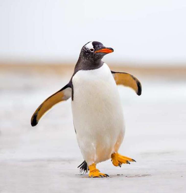 """""""الحب الحقيقي"""" موجود والدليل هذان البطريقان... ما فعلاه أشعل مواقع التواصل"""