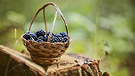 ما لم تعرفه عن أهمية الفاكهة في رمضان