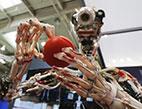 روبوتات نادلة وطباخة ورفيقة منزلية في معرض هانوفر للتقنية... بالصور